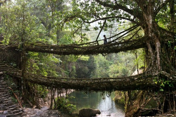 Living Bridge of Cherrapunji