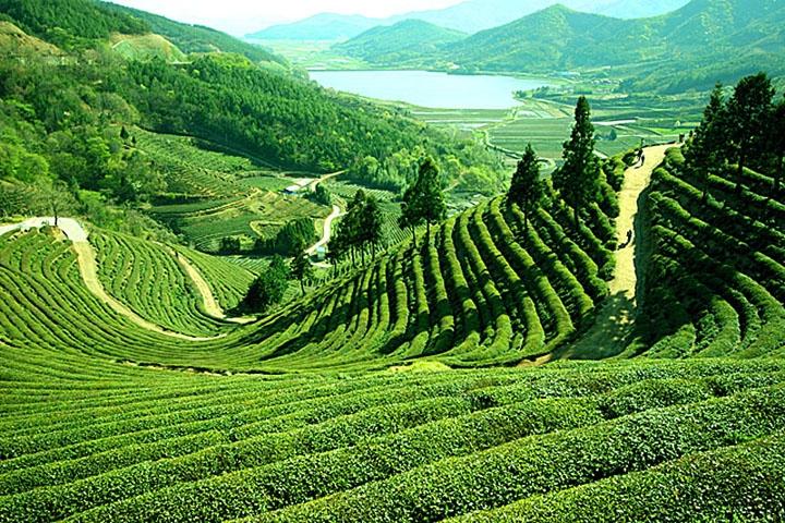 http://traveljee.com/wp-content/uploads/2013/12/darjeeling.jpg