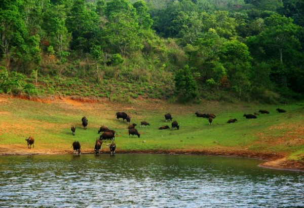 Thekkady Lush Greenery and Lake