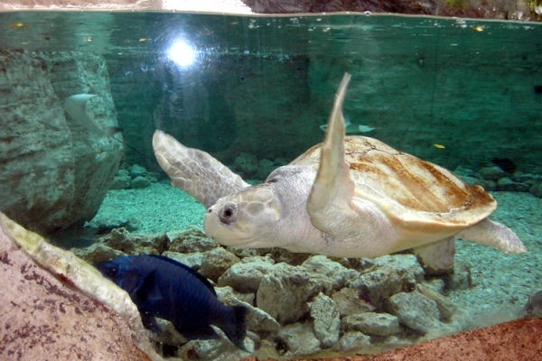 Dallas World Aquarium, Dallas
