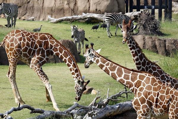 Dallas Zoo, Dallas
