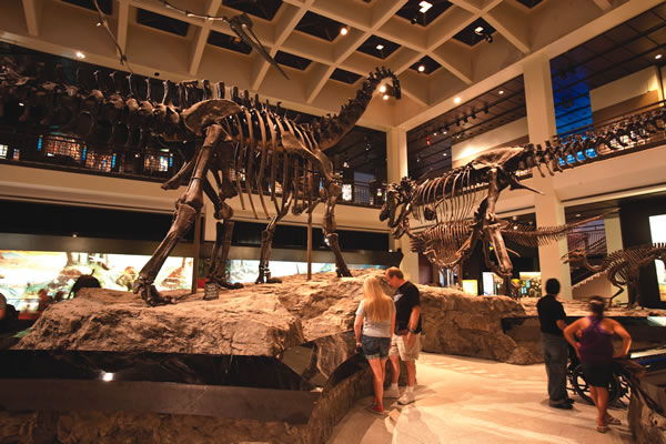 Houston Museum of Natural Science, Houston