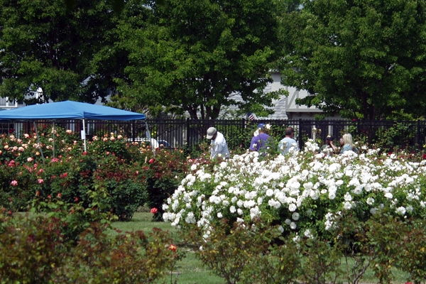 Roses In Garden: 10 Must To Visit Tourist Attractions In San Jose