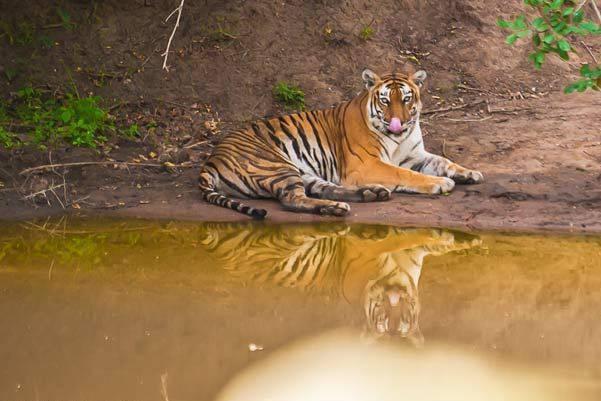 Maharajbagh Zoo, Nagpur