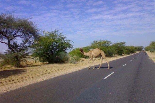 Jaisalmer to Barmer