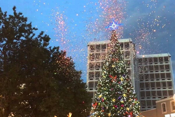 Christmas Trees in Dunedin
