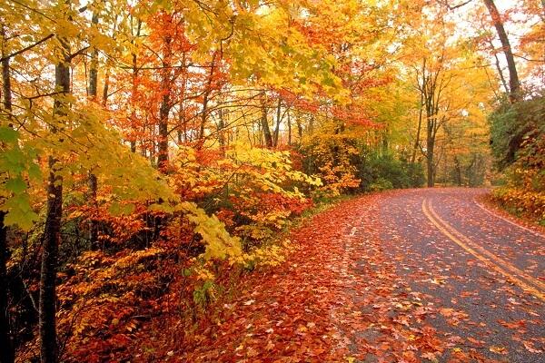 Autumn Season in USA