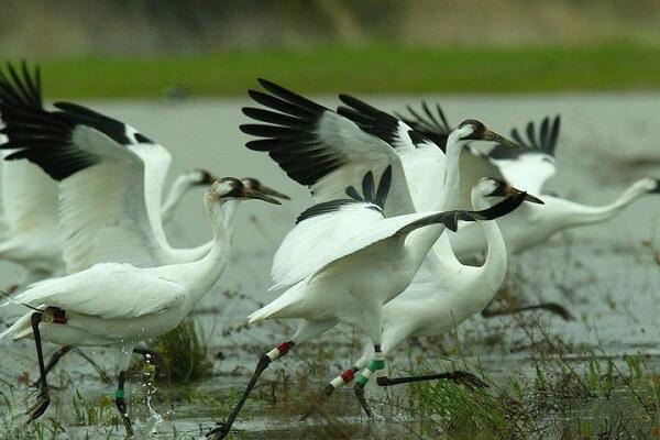 Sultanpur Bird Sanctuary Gurgaon